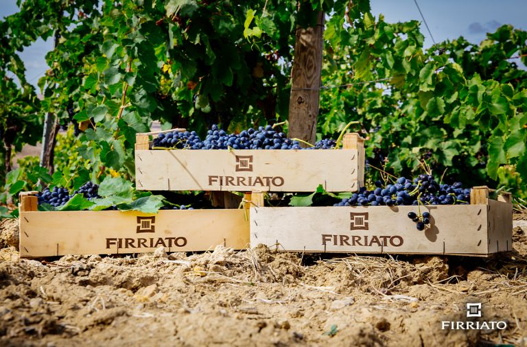 Harvest 2019 – Firriato
